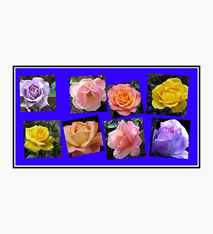 Roses of Many Colours Collage Photographic Print