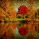 Autumn reflections by Chappy