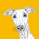 Whippet Dog Portrait ( yellow background ) by Adam Regester