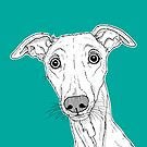 Whippet Dog Portrait ( teal background ) by Adam Regester