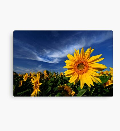 A touch of white Canvas Print