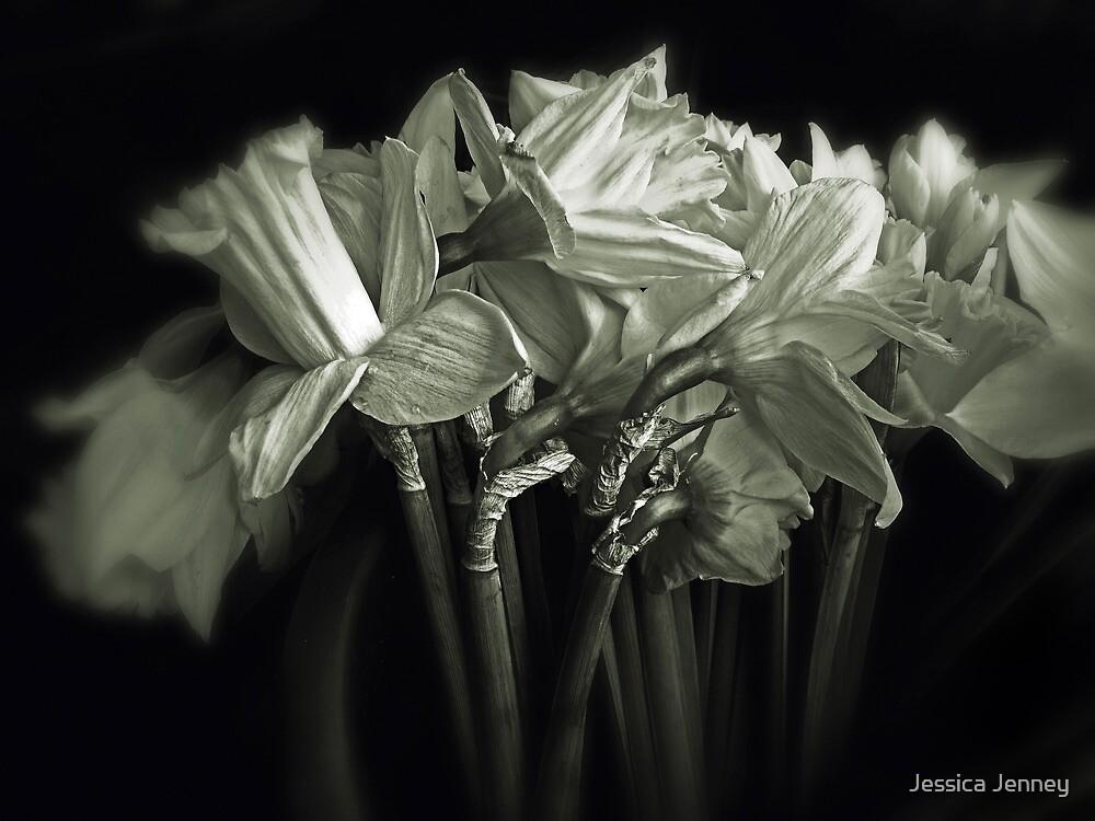 Daffodil Duotone    by Jessica Jenney