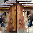 Welcome Back, Bluebirds by Judy Wanamaker