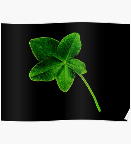 Luckier than Lucky -+ 5 Leaf Clover! Poster