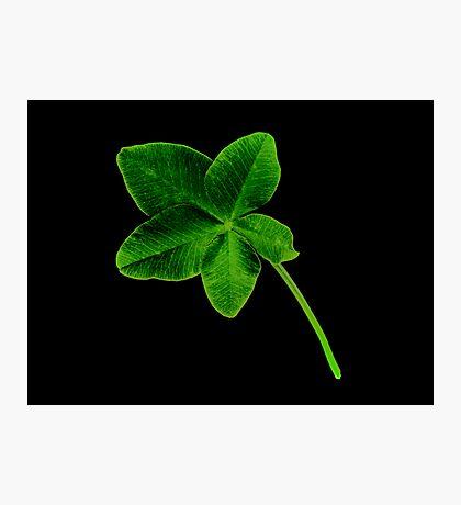 Luckier than Lucky -+ 5 Leaf Clover! Photographic Print