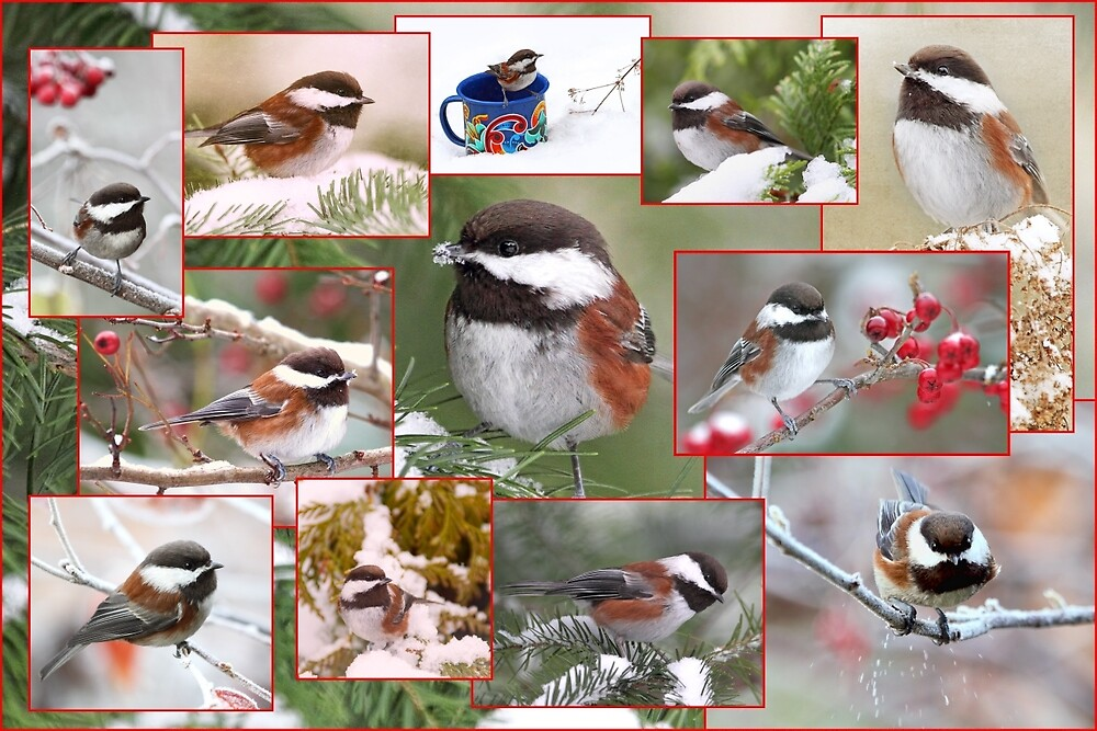 Chickadees in Winter Collage by Peggy Collins