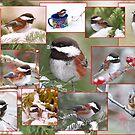Chickadees in der Winter-Collage von Peggy Collins