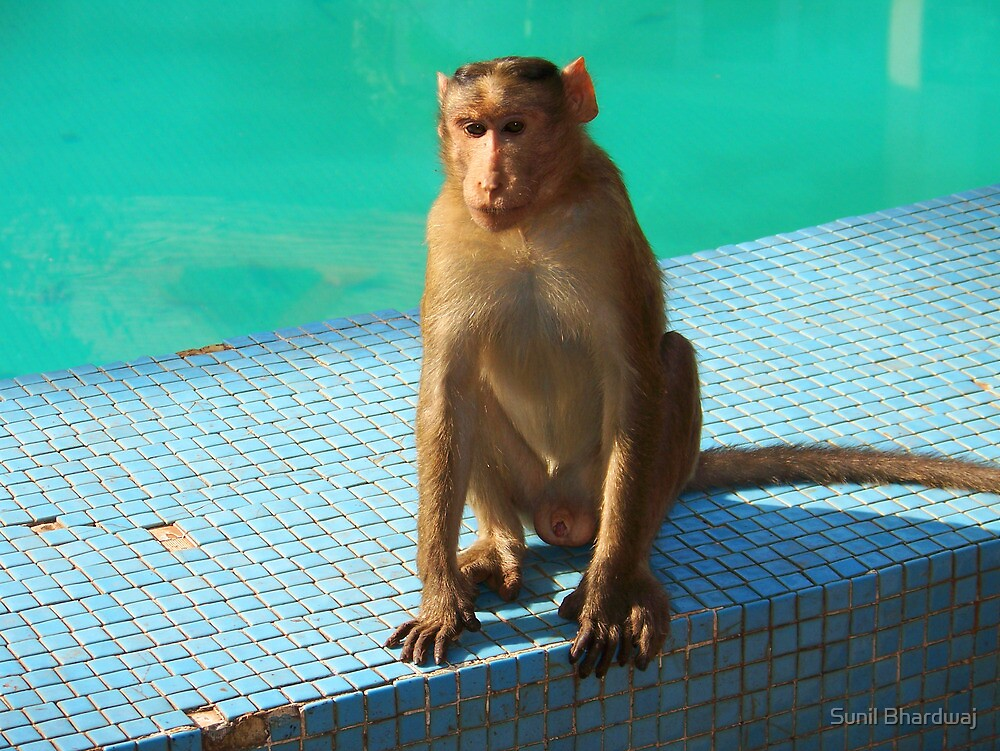 Monkey at pool  by Sunil Bhardwaj