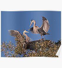 012111 Herons Poster