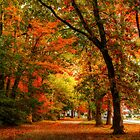 Autumn at the park... by Poete100