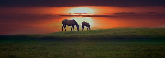 Sunset horses by Jenny Dean