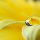 Simply yellow... by Mary Trebilco