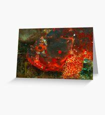 scorpionfish rottnest island reef  Greeting Card