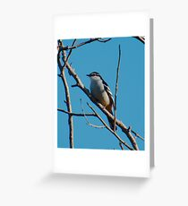 SC ~ WO ~ TRILLER ~ Varied Triller by David Irwin 131019 Greeting Card