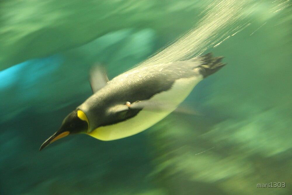 Diving Penguin by mars1303
