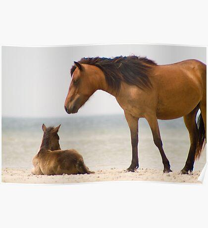 """""""Protector"""" - wild horses on the beach of Cedar Island, NC Poster"""