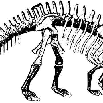 Skeleton of the Brontosaurus by SuperPayce