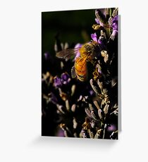 A Bee on a Lavender Greeting Card