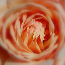 Secrets by Lozzar Flowers & Art