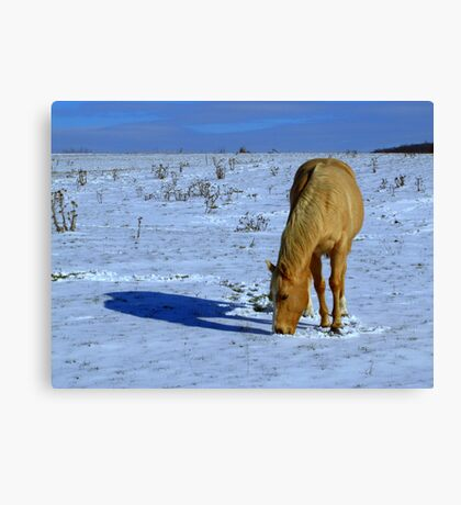 Golden Horse in Snowy Meadow Canvas Print