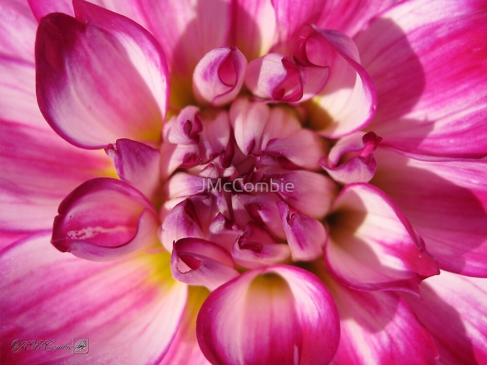 Dahlia named Who Dun It by JMcCombie