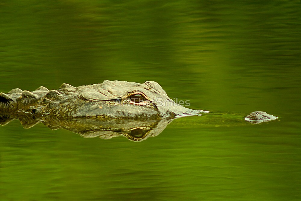 """Reflective Eyes"" - alligator in the Florida Everglades by ArtThatSmiles"