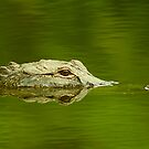 """""""Reflective Eyes"""" - alligator in the Florida Everglades by ArtThatSmiles"""