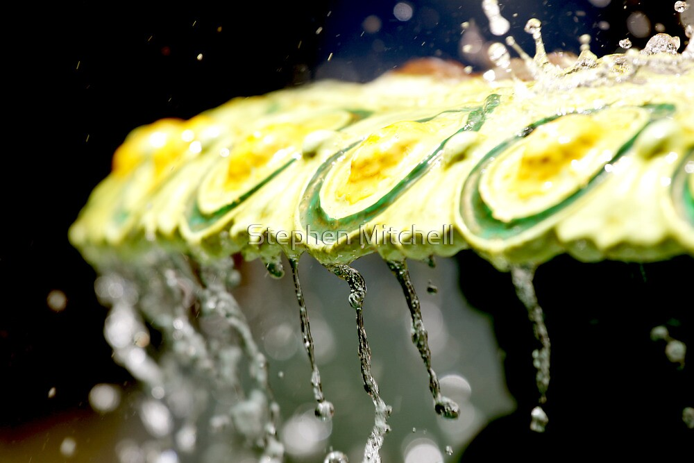 Fountain Splash by Stephen Mitchell