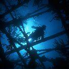 Diver above Wreck, Nassau, Bahamas by Shane Pinder