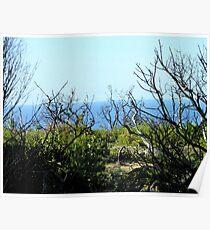 Ocean View through the Bush, West Australia Poster