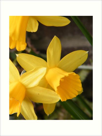 Spring Daffies by ElsT
