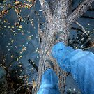 Why Did The Photographer Cross The Tree? by Bob Larson