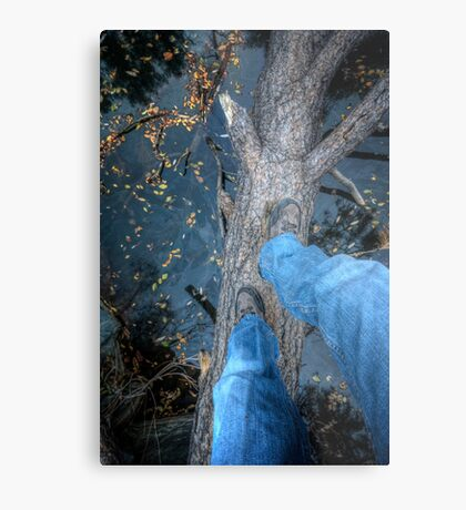 Why Did The Photographer Cross The Tree? Metal Print