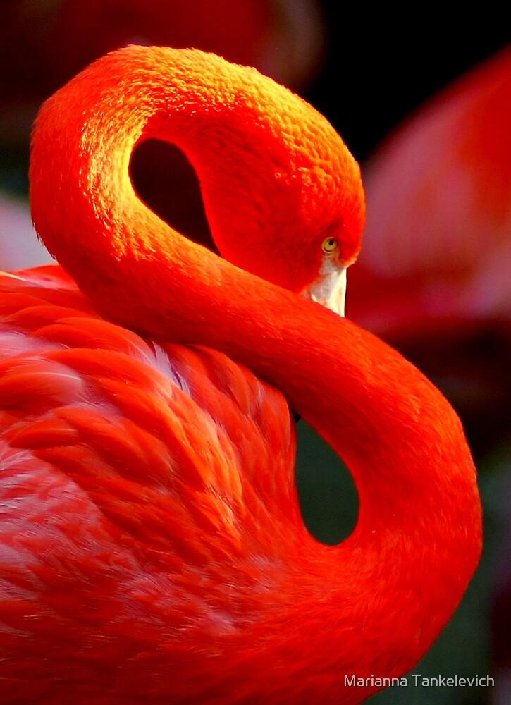 Flamingo by Marianna Tankelevich
