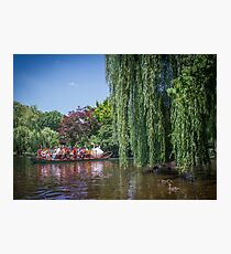swan boat Photographic Print