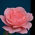 Petals Delight by Phrancis Whiteley