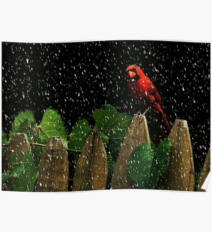 Male Cardinal Stare (snow effect) Poster