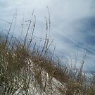 Sand, Wind and Reeds IV - Clearwater Beach, FL by Danielle Ducrest