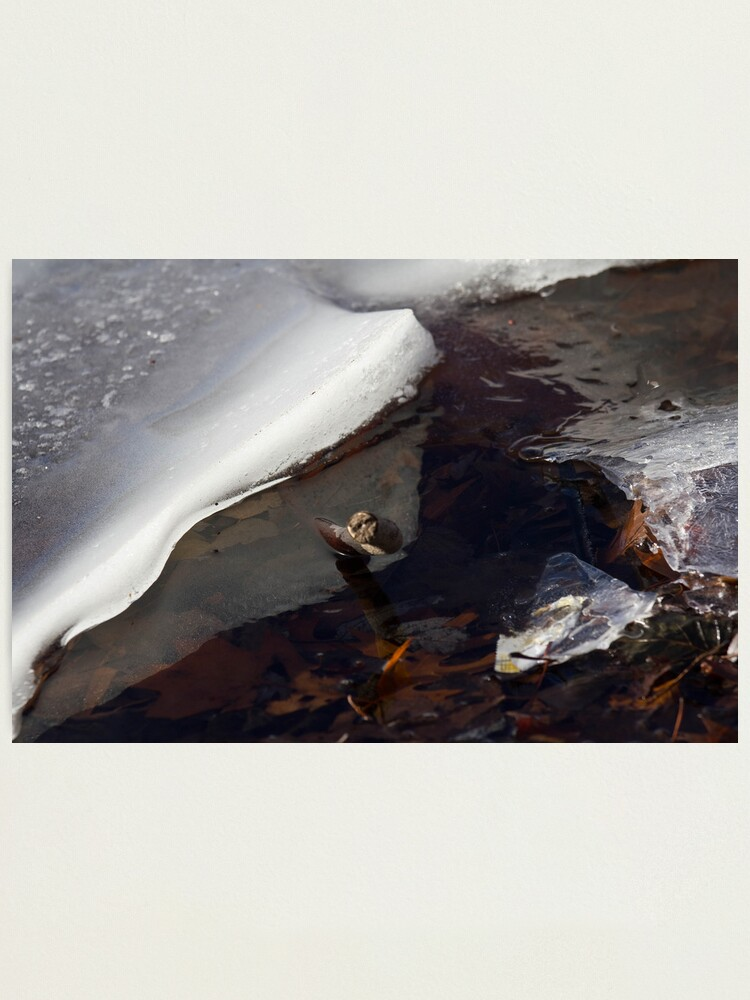 Alternate view of Ice, Branch and Leaves Photographic Print