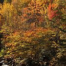 Colorful Smokies by Gary L   Suddath
