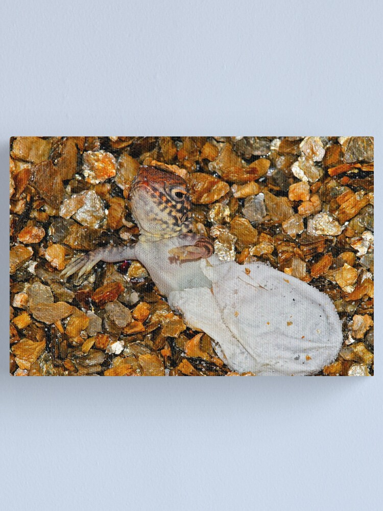 Alternate view of Central Netted Dragon Hatching Canvas Print