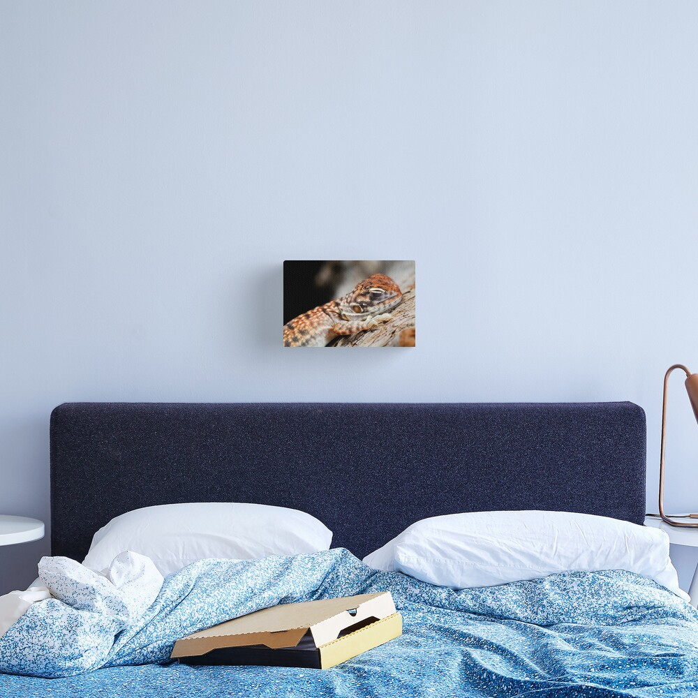 Central Netted Dragon Sleeping Canvas Print