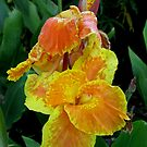 Yellow Flowers by Hank Eder
