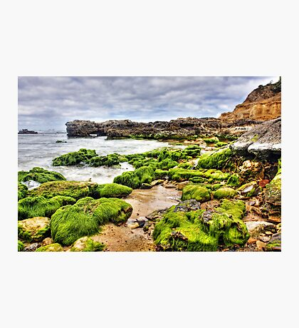 Emerald Walk Photographic Print