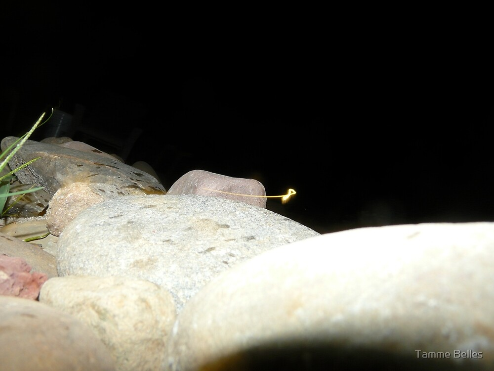 Fairy Land Night Scapes- Fairy Sighting by Tamme Belles