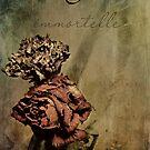 Immortelle by thinkingoutloud