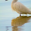 """Snowy Spectacle"" - snowy egret near Port Canaveral, Florida by ArtThatSmiles"
