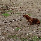 Fetch! by Brandi Beddingfield