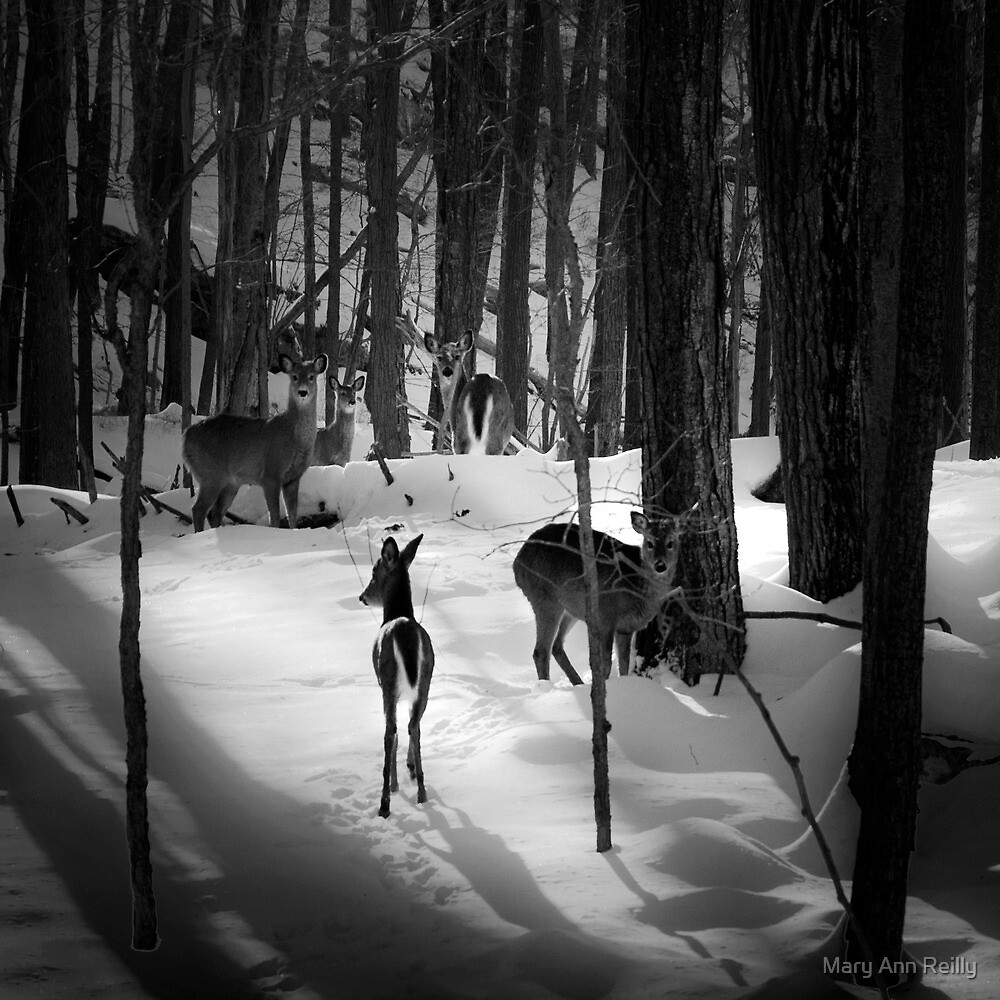 Five Deer in Snow by Mary Ann Reilly