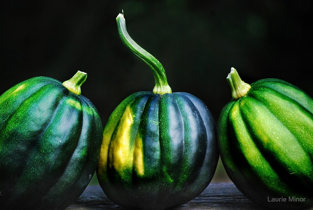 Acorn Squash by Laurie Minor